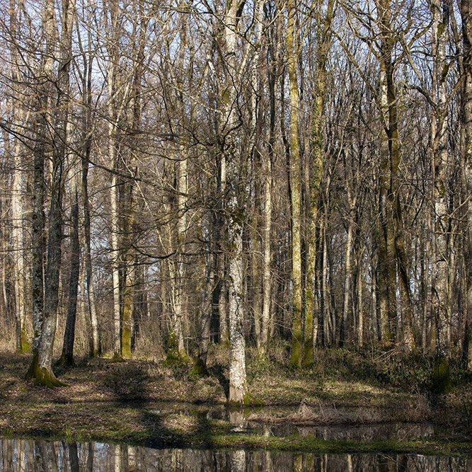 Belleau Wood © Rémy SALAÜN - All rights reserved
